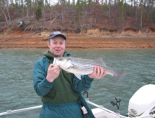 Nice Striper Caught at Clark Hill Lake